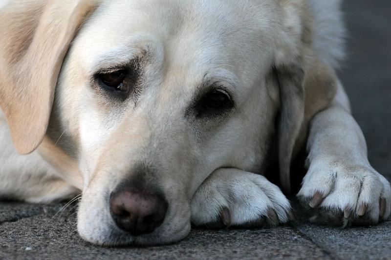 sad dog, rockridge, oakland